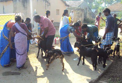 Animal Health Camp using Herbal Preparations